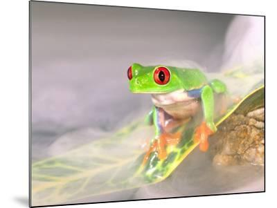 Red Eye Tree Frog in the Mist, Native to Central America-David Northcott-Mounted Photographic Print