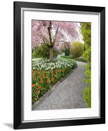 Tulip and Daffodil Garden at Tulip Festival, Skagit Valley, Washington-Jamie & Judy Wild-Framed Photographic Print