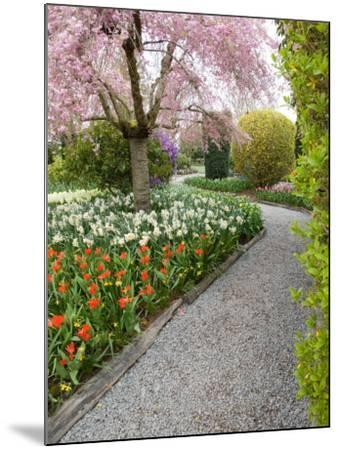 Tulip and Daffodil Garden at Tulip Festival, Skagit Valley, Washington-Jamie & Judy Wild-Mounted Photographic Print
