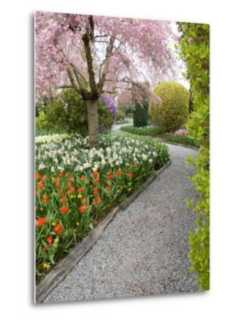 Tulip and Daffodil Garden at Tulip Festival, Skagit Valley, Washington-Jamie & Judy Wild-Metal Print