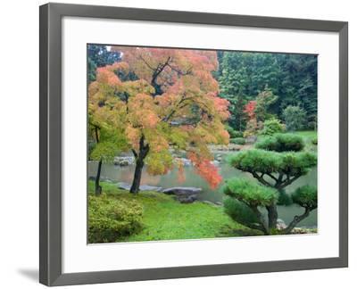 Autumn Color at the Japanese Garden, Washington Park Arboretum, Seattle, Washington, USA-Jamie & Judy Wild-Framed Photographic Print