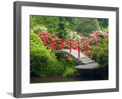 Moon Bridge and Blossoming Rhododendrons, Kubota Garden, Seattle, Washington, USA-Jamie & Judy Wild-Framed Photographic Print