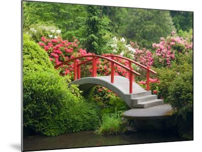 Moon Bridge and Blossoming Rhododendrons, Kubota Garden, Seattle, Washington, USA-Jamie & Judy Wild-Mounted Photographic Print