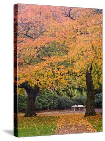 Quad in Autumn, University of Washington, Seattle, Washington, USA-Jamie & Judy Wild-Stretched Canvas Print