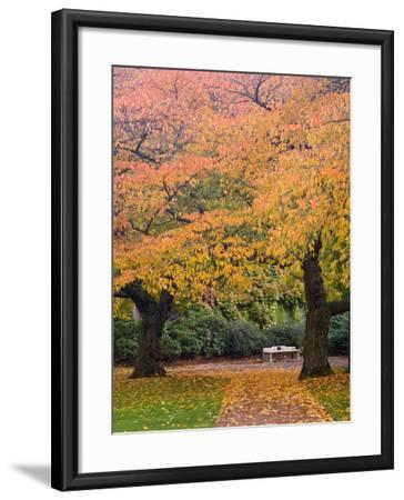 Quad in Autumn, University of Washington, Seattle, Washington, USA-Jamie & Judy Wild-Framed Photographic Print