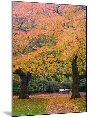 Quad in Autumn, University of Washington, Seattle, Washington, USA-Jamie & Judy Wild-Mounted Photographic Print