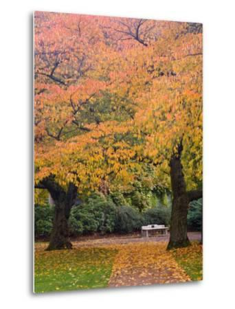 Quad in Autumn, University of Washington, Seattle, Washington, USA-Jamie & Judy Wild-Metal Print