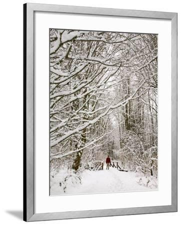 Trail and Hiker in Winter, Tiger Mountain State Forest, Washington, USA-Jamie & Judy Wild-Framed Photographic Print
