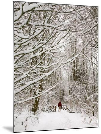 Trail and Hiker in Winter, Tiger Mountain State Forest, Washington, USA-Jamie & Judy Wild-Mounted Photographic Print