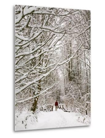 Trail and Hiker in Winter, Tiger Mountain State Forest, Washington, USA-Jamie & Judy Wild-Metal Print