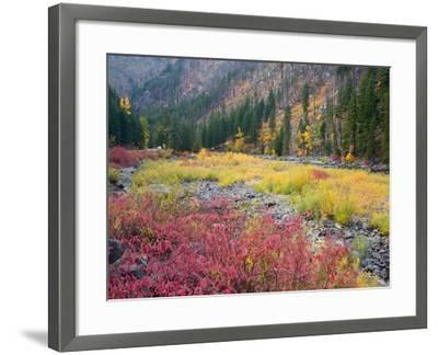 Autumn Color Along the Wenatchee River, Tumwater Canyon, Wenatchee National Forest, Washington, USA-Jamie & Judy Wild-Framed Photographic Print