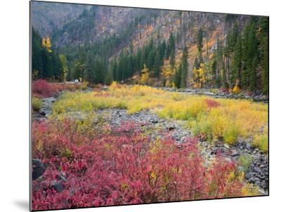Autumn Color Along the Wenatchee River, Tumwater Canyon, Wenatchee National Forest, Washington, USA-Jamie & Judy Wild-Mounted Photographic Print