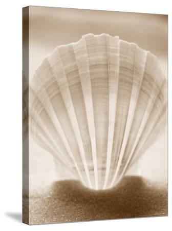 Luminescent Irish Deep Seashell--Stretched Canvas Print