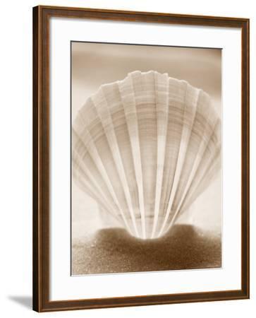 Luminescent Irish Deep Seashell--Framed Photo