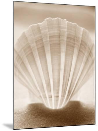 Luminescent Irish Deep Seashell--Mounted Photo