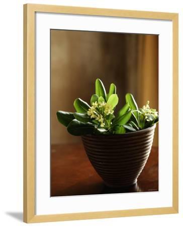 Petite Blossoms I--Framed Photo