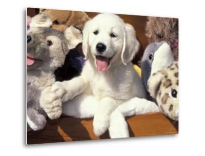 Golden Retriever Puppy with Toys-Lynn M^ Stone-Metal Print