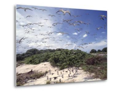 Tern Colony on Tubbataha Reef Philippines-Jurgen Freund-Metal Print