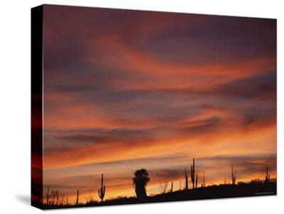 Cardon Cactus and Palm Tree Silhouette at Sunset, Baja California, Mexico-Jurgen Freund-Stretched Canvas Print