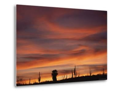 Cardon Cactus and Palm Tree Silhouette at Sunset, Baja California, Mexico-Jurgen Freund-Metal Print
