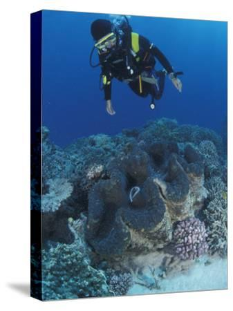 Diver and Giant Clam in Coral Reef, Great Barrier Reef, Australia-Jurgen Freund-Stretched Canvas Print