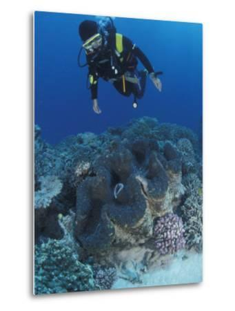 Diver and Giant Clam in Coral Reef, Great Barrier Reef, Australia-Jurgen Freund-Metal Print