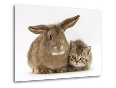 British Shorthair Brown Tabby Female Kitten with Young Agouti Rabbit-Jane Burton-Metal Print