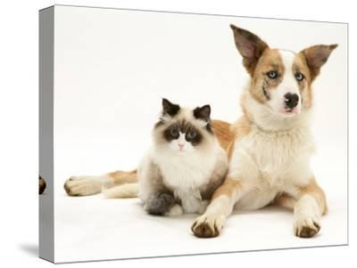 Fluffy Kitten Cuddled up with Dog-Jane Burton-Stretched Canvas Print