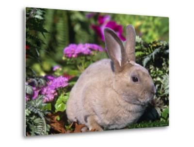 Mini Rex Rabbit, USA-Lynn M^ Stone-Metal Print