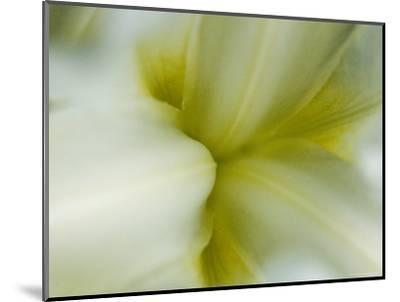 Close View of Pale Yellow Flower, Groton, Connecticut-Todd Gipstein-Mounted Photographic Print