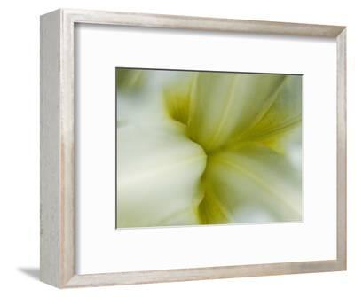 Close View of Pale Yellow Flower, Groton, Connecticut-Todd Gipstein-Framed Photographic Print