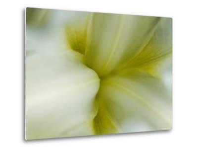 Close View of Pale Yellow Flower, Groton, Connecticut-Todd Gipstein-Metal Print