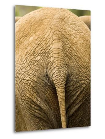 Closeup of the Rear Ened of an African Elephant-Tim Laman-Metal Print