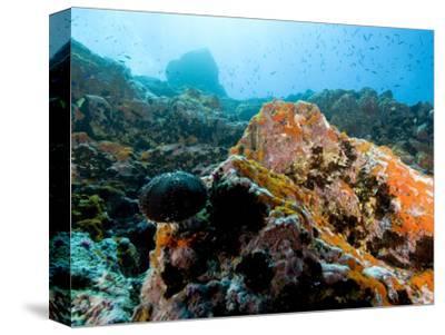 Colorful Underwater Scene, Fatu Hiva Island, French Polynesia-Tim Laman-Stretched Canvas Print