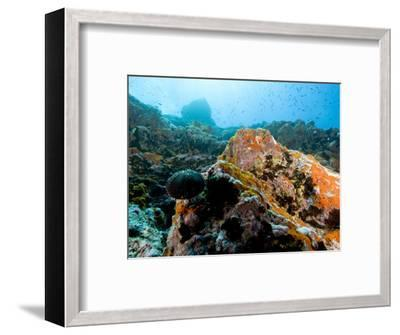 Colorful Underwater Scene, Fatu Hiva Island, French Polynesia-Tim Laman-Framed Photographic Print