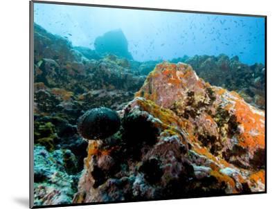 Colorful Underwater Scene, Fatu Hiva Island, French Polynesia-Tim Laman-Mounted Photographic Print
