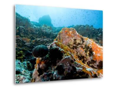 Colorful Underwater Scene, Fatu Hiva Island, French Polynesia-Tim Laman-Metal Print