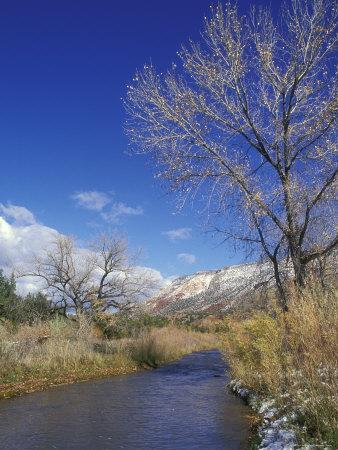 Cat Mesa, Jemez River and Cottonwood Tree, New Mexico-Rich Reid-Framed Photographic Print
