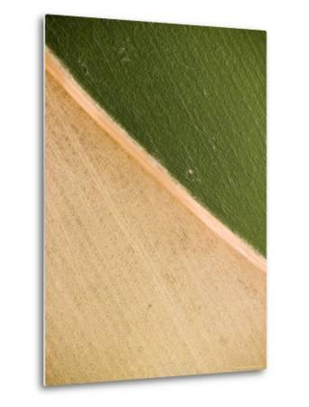 Alfalfa Crop with Pivot Irrigation, Zambia-Michael Fay-Metal Print