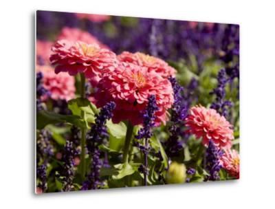 Closeup of Colorful Flowers in Butchart Gardens-Tim Laman-Metal Print