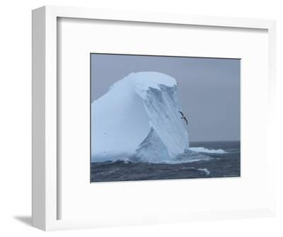 Black-Browed Albatross Flies Past Iceberg-Ralph Lee Hopkins-Framed Photographic Print