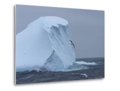 Black-Browed Albatross Flies Past Iceberg-Ralph Lee Hopkins-Metal Print