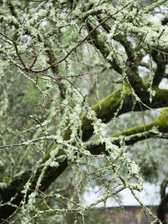 Close-Up of Moss Covered Wet Tree Branch, California-James Forte-Framed Photographic Print