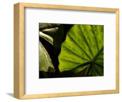 Close-Up of a Green Leaf, Dahab, Egypt, Middle East-Brimberg & Coulson-Framed Photographic Print