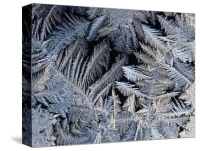 Close View of Frost Crystals-Tim Laman-Stretched Canvas Print