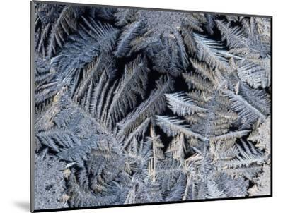 Close View of Frost Crystals-Tim Laman-Mounted Photographic Print
