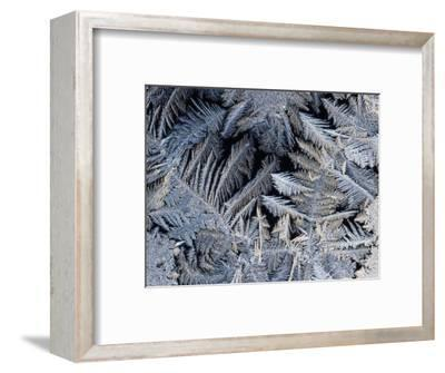 Close View of Frost Crystals-Tim Laman-Framed Photographic Print