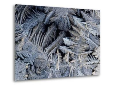 Close View of Frost Crystals-Tim Laman-Metal Print
