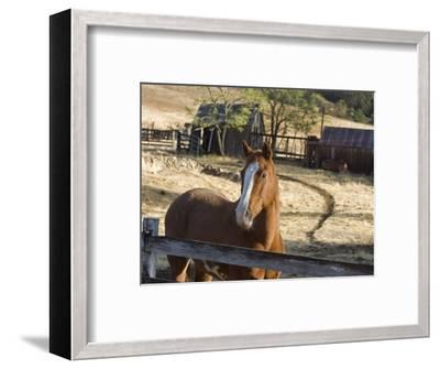 Horse on Santa Rosa Creek Road, Cambria, California-Rich Reid-Framed Photographic Print