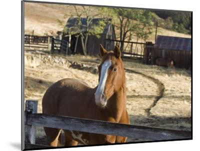 Horse on Santa Rosa Creek Road, Cambria, California-Rich Reid-Mounted Photographic Print
